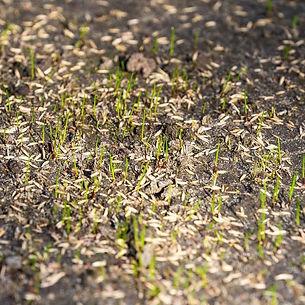 Grass Seed 2.jpg
