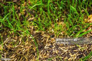 Planting Grass Seed.jpg