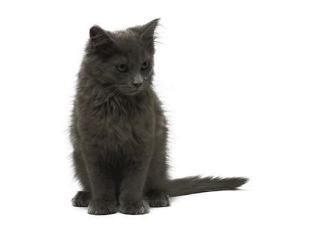 Extreme makeover: Socializing feral kittens