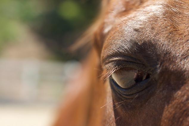 AK Lechner _Horse_Portrait