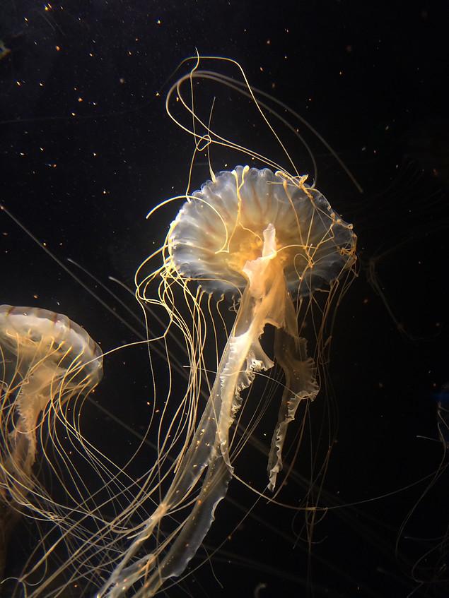 AK Lechner _Aquarium_Portrait