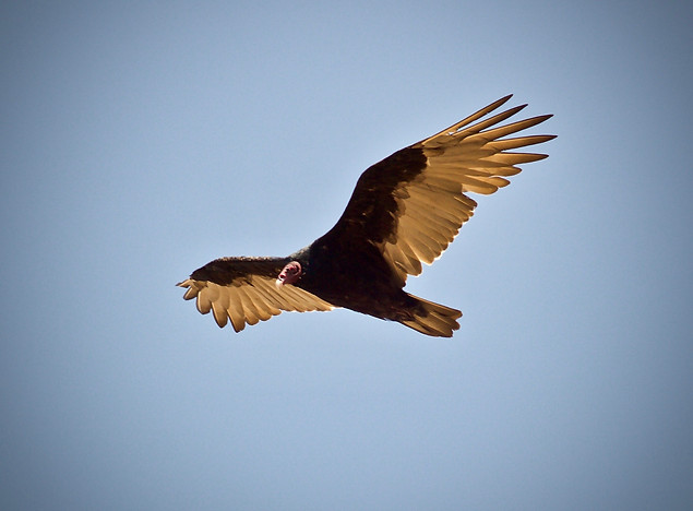 AK Lechner _Bird_Portrait