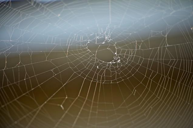 AK Lechner _Spider Web_Portrait