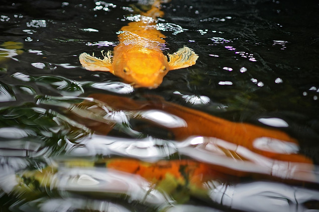 AK Lechner _Koy Fish_Portrait