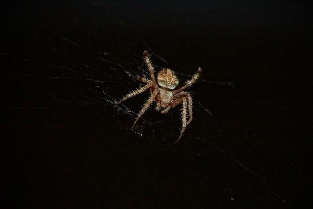 AK Lechner _Spider_Portrait