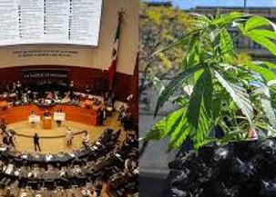 Senado Cannabis.jpg