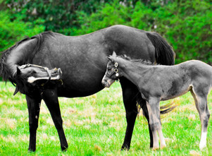 Mare and Foal_edited.jpg