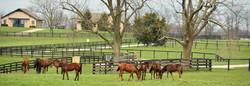 Farm Scene Woodford County Kentucky