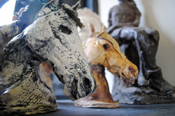 Horses by Carolyn Goodwin