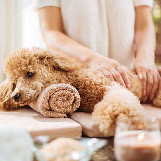 Pet lovers - Natural remedies & alternative therapies for furbabies