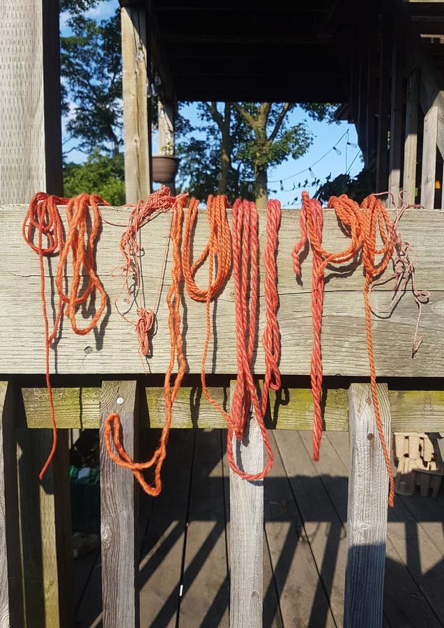 Madder root fibre