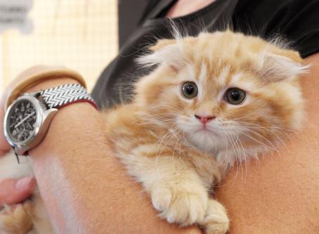 Negozio per Cani Milano: cuccioli di cane e gatto disponibili ad ottobre 2020