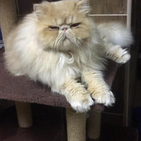 Persiano