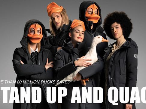 Save The duck - shooting - Agenzia Animali a Milano AnimalSpotMilano