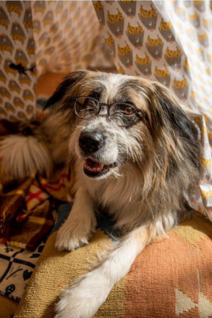 Occhialin fielmann cane