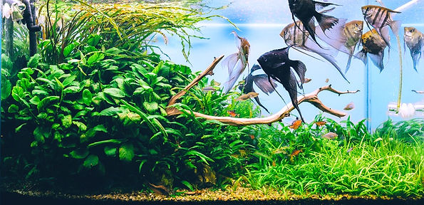 Negozio pesci milano