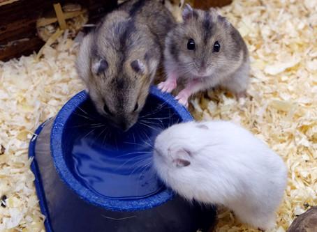 AnimalHouseMilano negozio di animali Disponibilità Ottobre 2020
