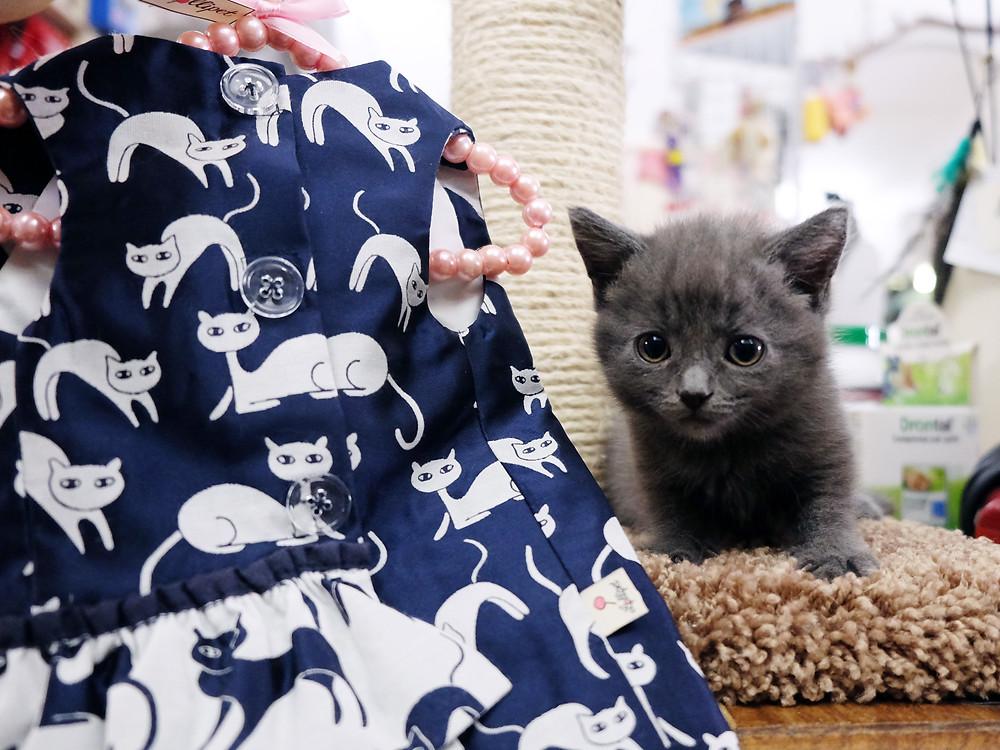 abbigliamento per gatti milano