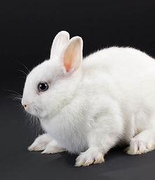 Negozio di conigl nani a Milano