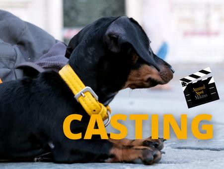 24/10/2020 PROSSIMO CASTING ANIMALI A MILANO:  Iscrizioni aperte dal 19 ottobre