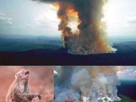 Amazzonia is on Fire