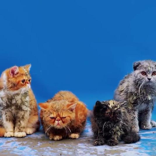 TOILET PAPER   No ordinary Cats NYTimes Magazine Maurizio Cattelan  Animal Spot Milano