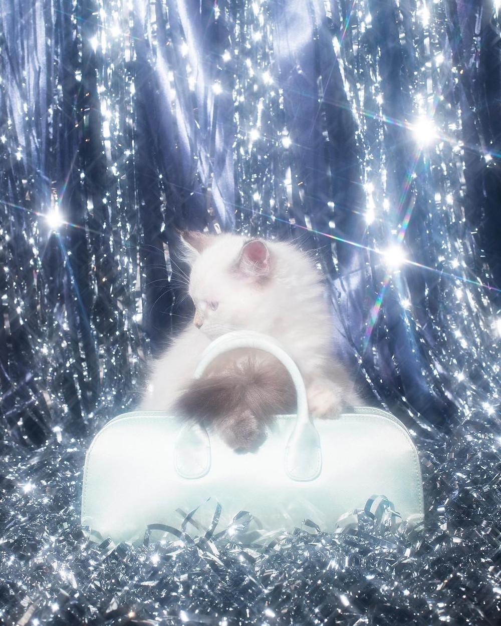 Harper's bazaar gatti