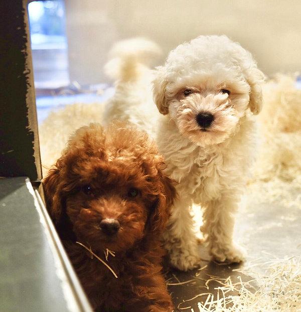 Negozio cani milano
