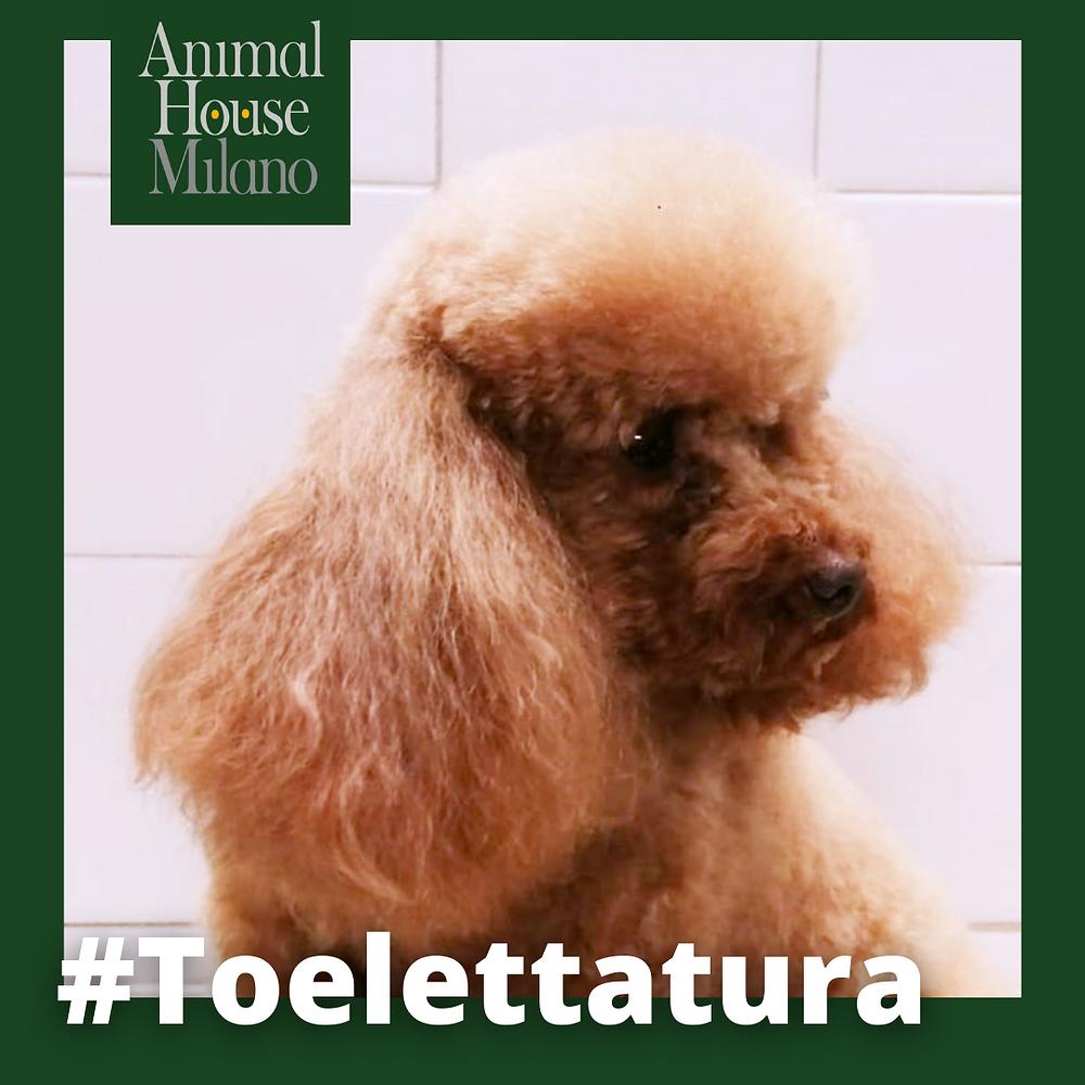toelettatura cani a Milano