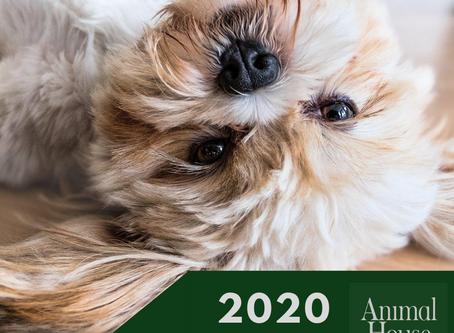Pensione per animali a Milano