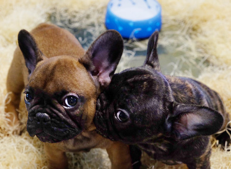 Disponibilità cuccioli Aprile 2020