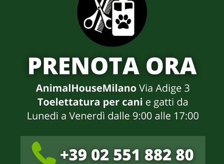 Toelettatura per cani a Milano