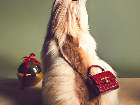 Tod's Pawfect Holiday 2020 in Tod's Friends with AnimalSpotMilano pet agenzy