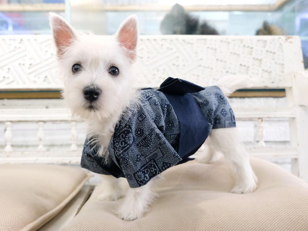 abbigliamento per cani milano