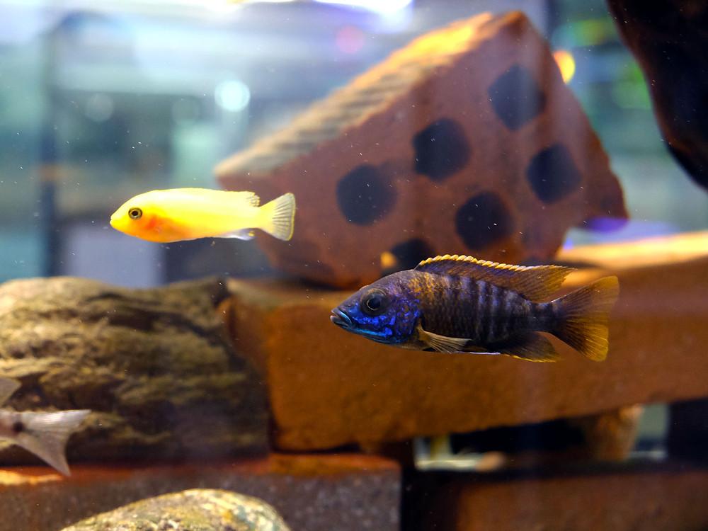 negozio di acquari a Milano