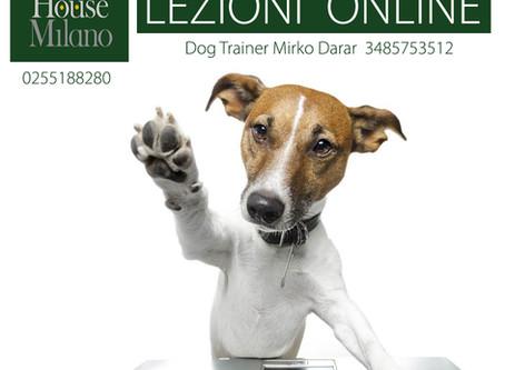 Lezioni online: addestramento
