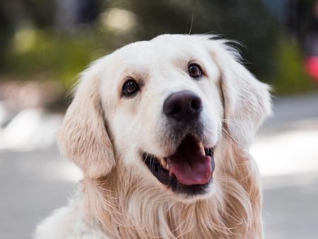 Casting per Cani: come funziona? - AnimalSpotMilano Agenzia Animali