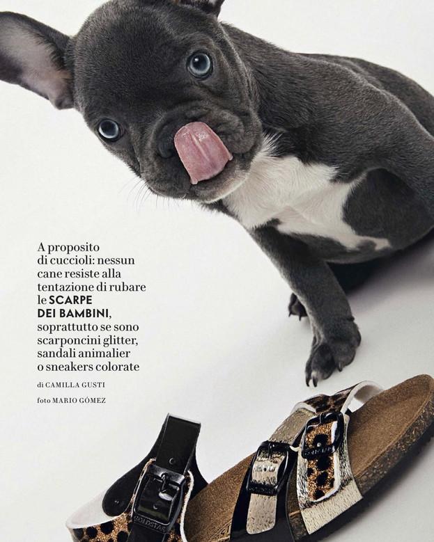 Vanity Fair Animal Spot Milano  @vanityfairitalia Producer: @marinamoretti64 Foto: @mariogomezphotography A cura di Camilla Giusti Bulldog: Lillo