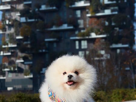 Impronta tessile - campagna pubblicitaria - Shooting e video con cani attori a Milano