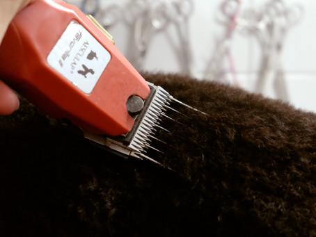 Toelettatura cani a Milano: taglio del pelo del cane