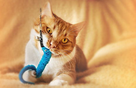 cat-4994140_1920.jpg