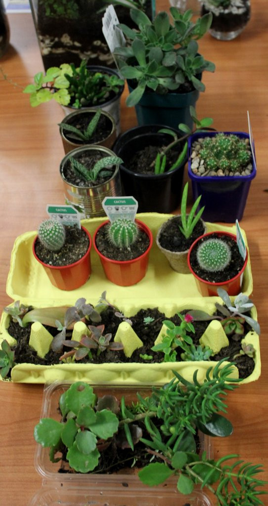 A selection of succulents