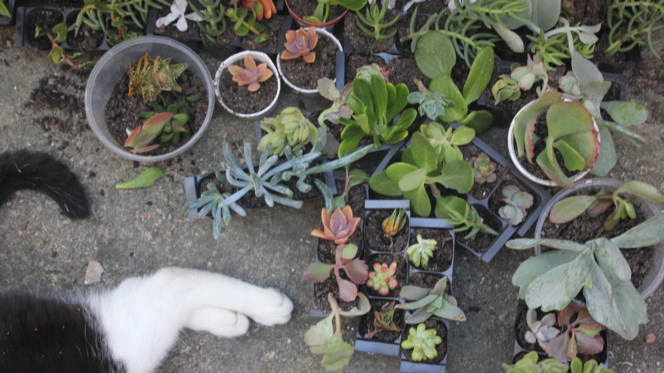 Best spot for Succulents
