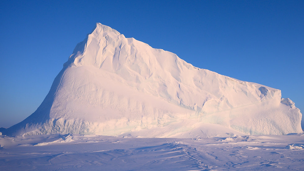 Iceberg Tour- Dog Team
