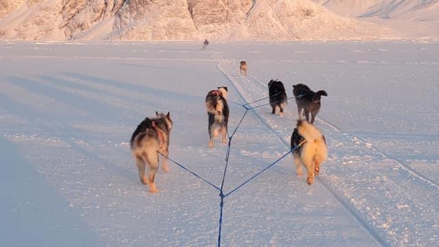 Dog Team Tours