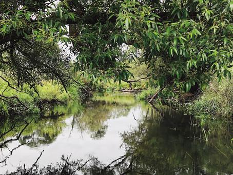 SUP spływ – rzeka Ina odcinek Łęsko-Goleniów