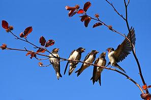 swallow-3584915_1920.jpg