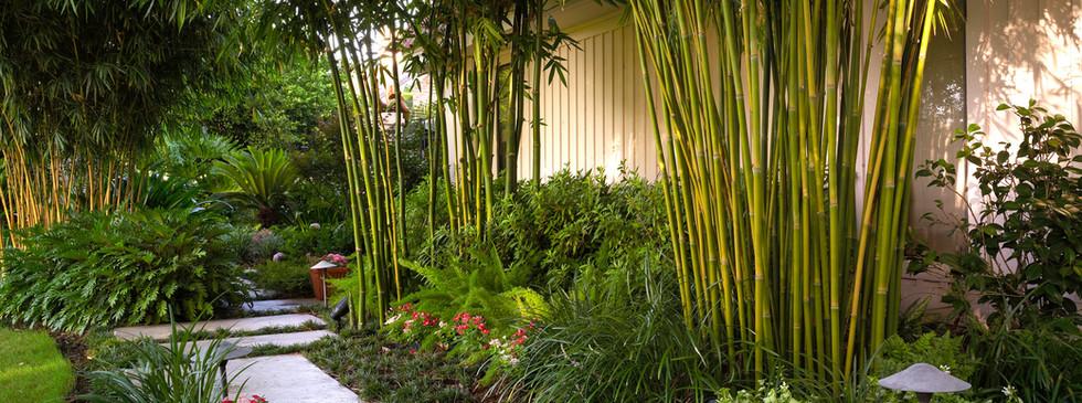 Tropical Landscape Design and Installation