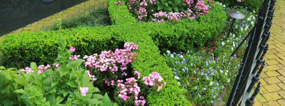 Boxwood Hedges with Seasonal Color