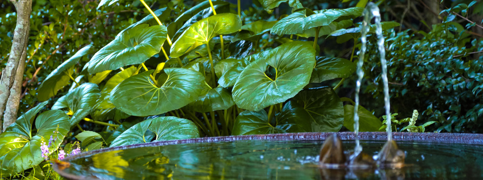 Garden Fountain Water Feature with Flowers and Ligularia